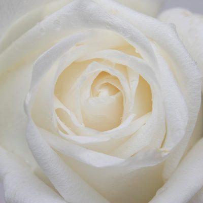 Tarjetas de Agradecimiento o Condolencia - YouTube