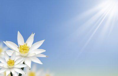 Mensajes De Buenos Días | Buscar bonitas frases de buenos dias