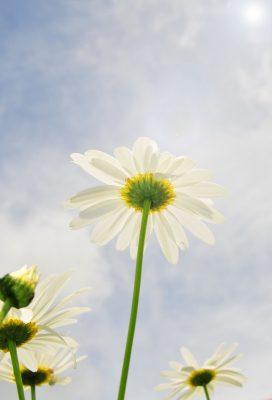 descargar mensajes de buenos días para tu amor, nuevas palabras de buenos días para tu amor