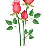 descargar mensajes cristianos para el dia de la Madre,feliz dia de la Madre cristianos,frases cristianas con imàgenes para el dia de la Madre,saludos cristianos para el dia de la Madre