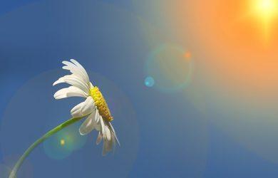 buscar bonitos mensajes de buenos días para mi amor